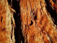 Asisbiz Textures Trees bark 02