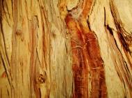 Asisbiz Textures Trees bark 03