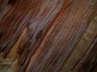 Asisbiz Textures Trees bark 04