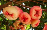 Asisbiz Philippines Fruits Berries Seeds 21
