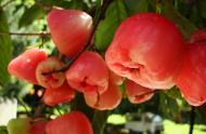 Asisbiz Philippines Fruits Berries Seeds 26