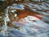 Asisbiz Textures Flowing Water Kondalilla Falls Reflections Nature 02