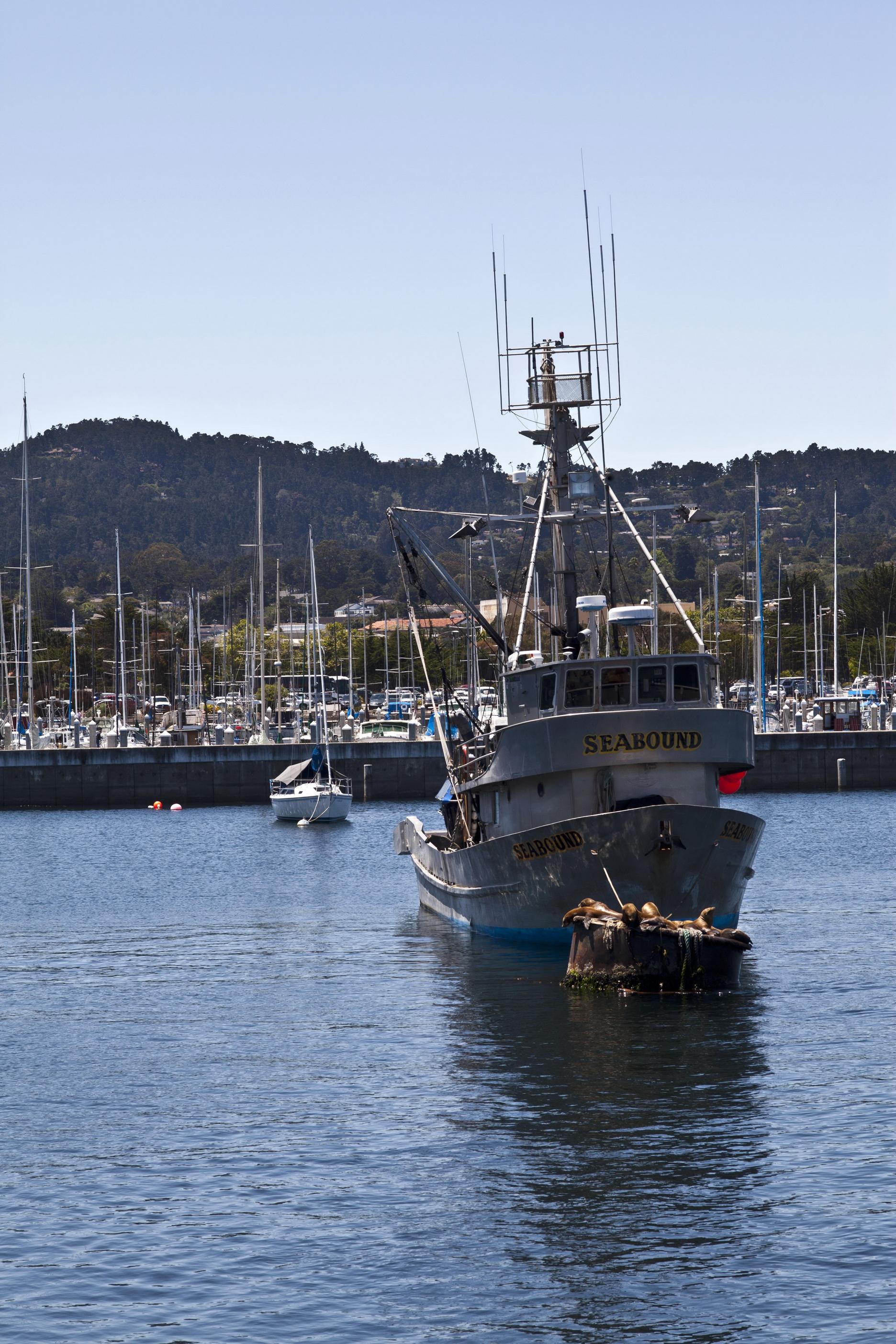 California Sea Lion Zalophus californianus Wharf 2 Monterey California July 2011 06