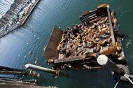 Asisbiz California Sea Lion Zalophus californianus Old Fishermans Grotto Wharf Monterey 55