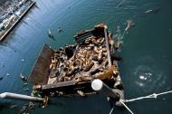 Asisbiz California Sea Lion Zalophus californianus Old Fishermans Grotto Wharf Monterey 58