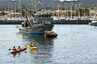 Asisbiz California Sea Lion Zalophus californianus Wharf 2 Monterey California July 2011 01