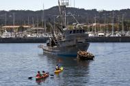 Asisbiz California Sea Lion Zalophus californianus Wharf 2 Monterey California July 2011 03