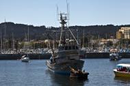 Asisbiz California Sea Lion Zalophus californianus Wharf 2 Monterey California July 2011 05
