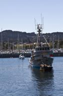 Asisbiz California Sea Lion Zalophus californianus Wharf 2 Monterey California July 2011 06