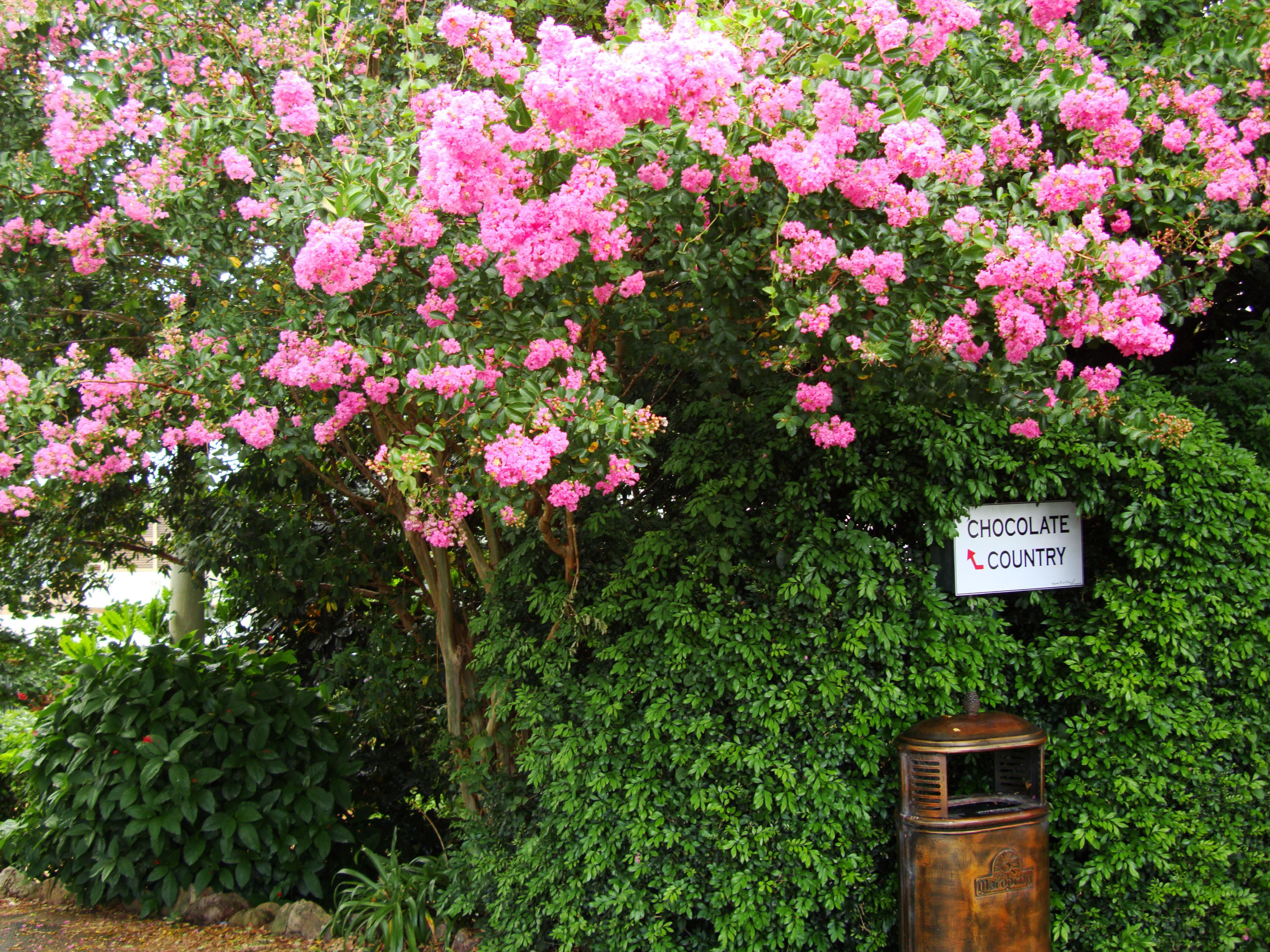 Asisbiz australia flaxton area flowering bushes 01 australia flaxton area flowering bushes 01 izmirmasajfo