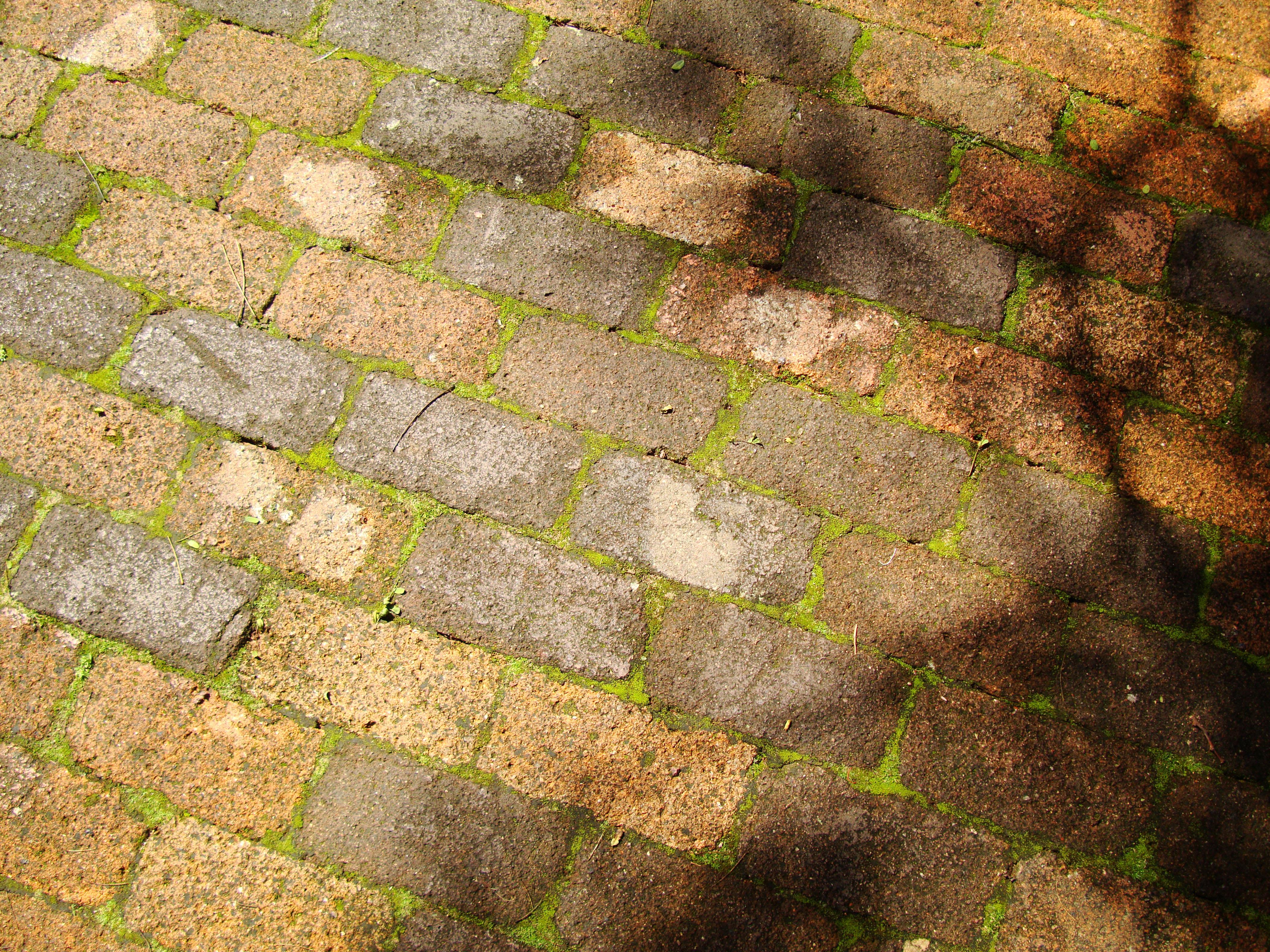 Brick pathway texture