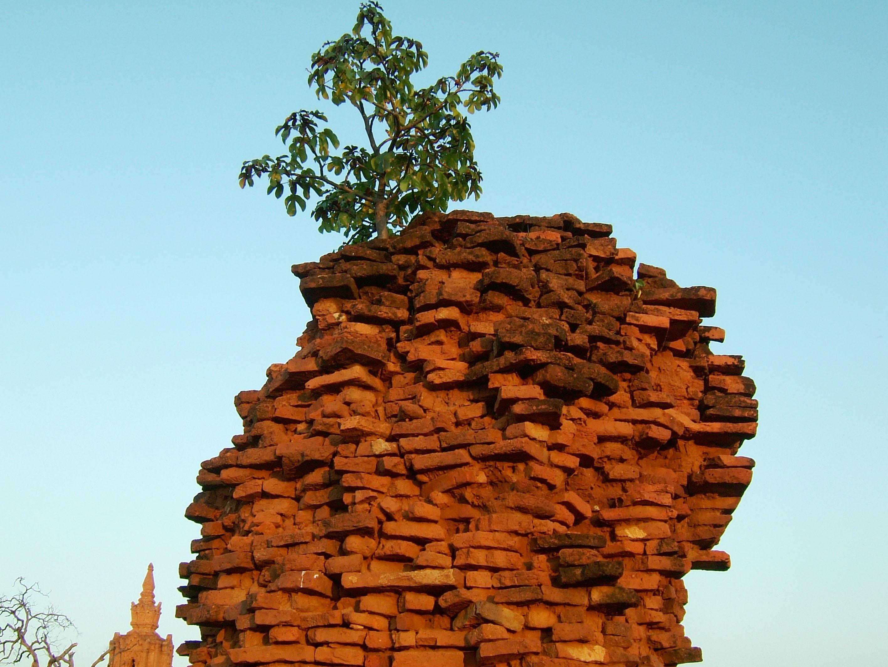 Textures Brickwork clay bricks Pagan 04