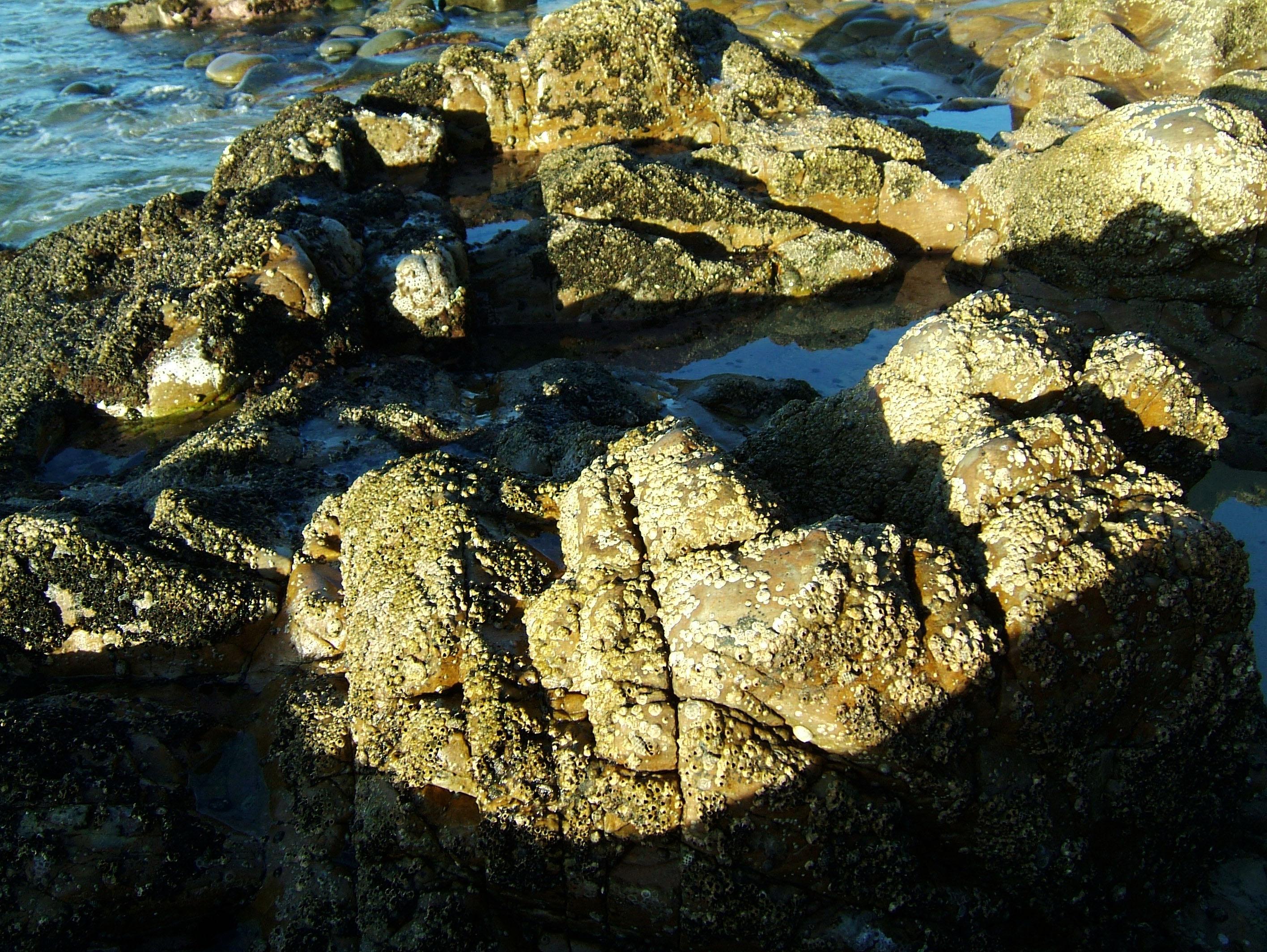Textures Rocks Stones Pebbles Noosa National Park 07