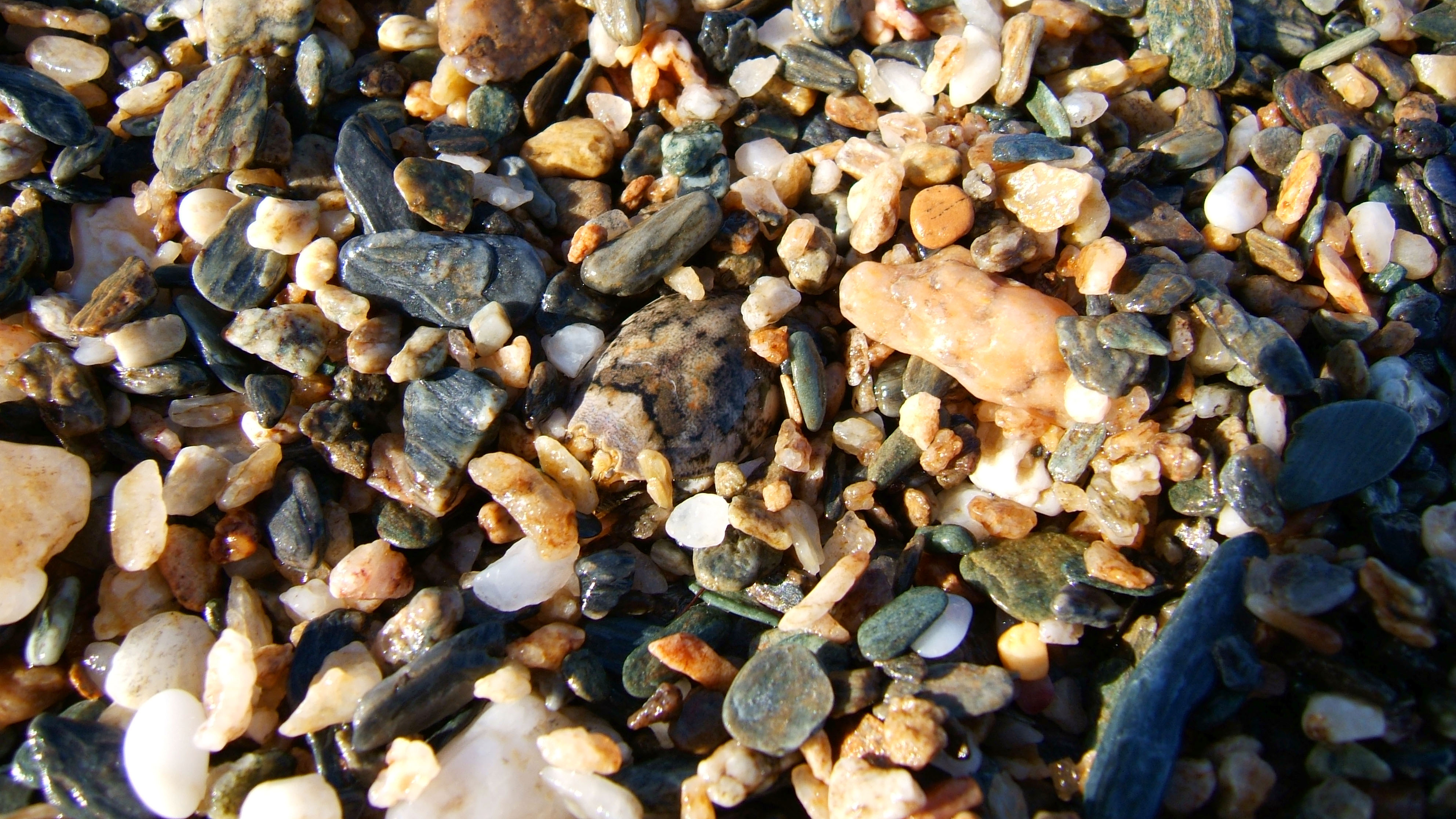 Textures Stones Pebbles Mindoro Tabinay Creatures 01