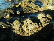 Asisbiz Textures Rocks Stones Pebbles Noosa National Park 07