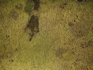 Asisbiz Textures Rocks Stones Pebbles Noosa National Park 21