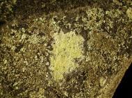 Asisbiz Textures Rocks Stones Pebbles Noosa National Park 22