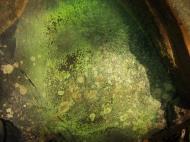 Asisbiz Textures Rocks Stones Pebbles Noosa National Park 25