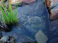 Asisbiz Textures Stones Pebbles Noosa National Park 01