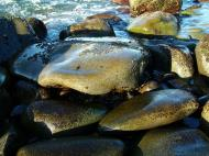 Asisbiz Textures Stones Pebbles Noosa National Park 09