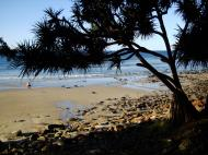 Asisbiz Trees Pandanas Tree Noosa National Park 08