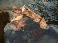 Asisbiz Textures Flowing Water Kondalilla Falls Reflections Nature 05