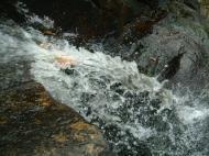Asisbiz Textures Flowing Water Kondalilla Falls Reflections Nature 06