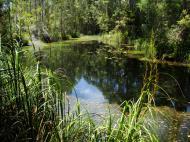 Asisbiz Textures Water Pond 01
