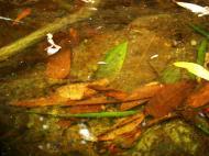 Asisbiz Textures Water Refections Nature Creek 01