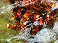 Asisbiz Textures Water Refections Nature Creek 04