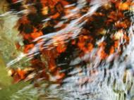 Asisbiz Textures Water Refections Nature Creek 05