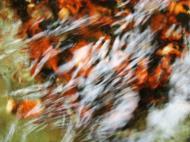 Asisbiz Textures Water Refections Nature Creek 06