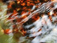 Asisbiz Textures Water Refections Nature Creek 07