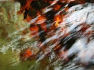 Asisbiz Textures Water Refections Nature Creek 10