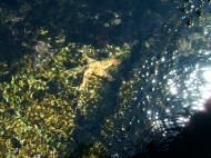 Asisbiz Textures saltwater Monterey Carmel seashore Marine life 04