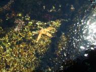 Asisbiz Textures saltwater Monterey Carmel seashore Marine life 05