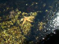 Asisbiz Textures saltwater Monterey Carmel seashore Marine life 06