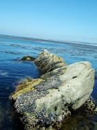 Asisbiz Textures saltwater Monterey Carmel seashore Marine life 09