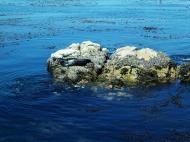 Asisbiz Textures saltwater Monterey Carmel seashore Marine life 12
