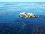 Asisbiz Textures saltwater Monterey Carmel seashore Marine life 13