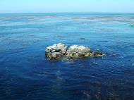 Asisbiz Textures saltwater Monterey Carmel seashore Marine life 14