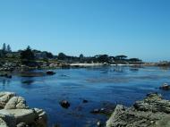 Asisbiz Textures saltwater Monterey Carmel seashore Marine life 15