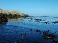 Asisbiz Textures saltwater Monterey Carmel seashore Marine life 17