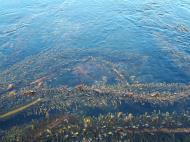 Asisbiz Textures saltwater Monterey Carmel seashore Marine life 19
