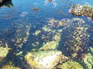Asisbiz Textures saltwater Monterey Carmel seashore Marine life 22