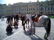 Asisbiz Russia Saint Petersburg Horses 2005 01