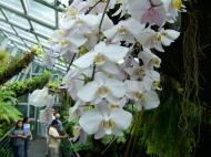 Asisbiz Singapore Botanical Gardens Nov 2004 02