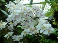 Asisbiz Singapore Botanical Gardens Nov 2004 03