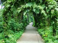 Asisbiz Singapore Botanical Gardens Nov 2004 04