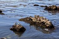 Asisbiz Bird rock area Pebble Beach area 17 Mile Drive Monterey California July 2011 01